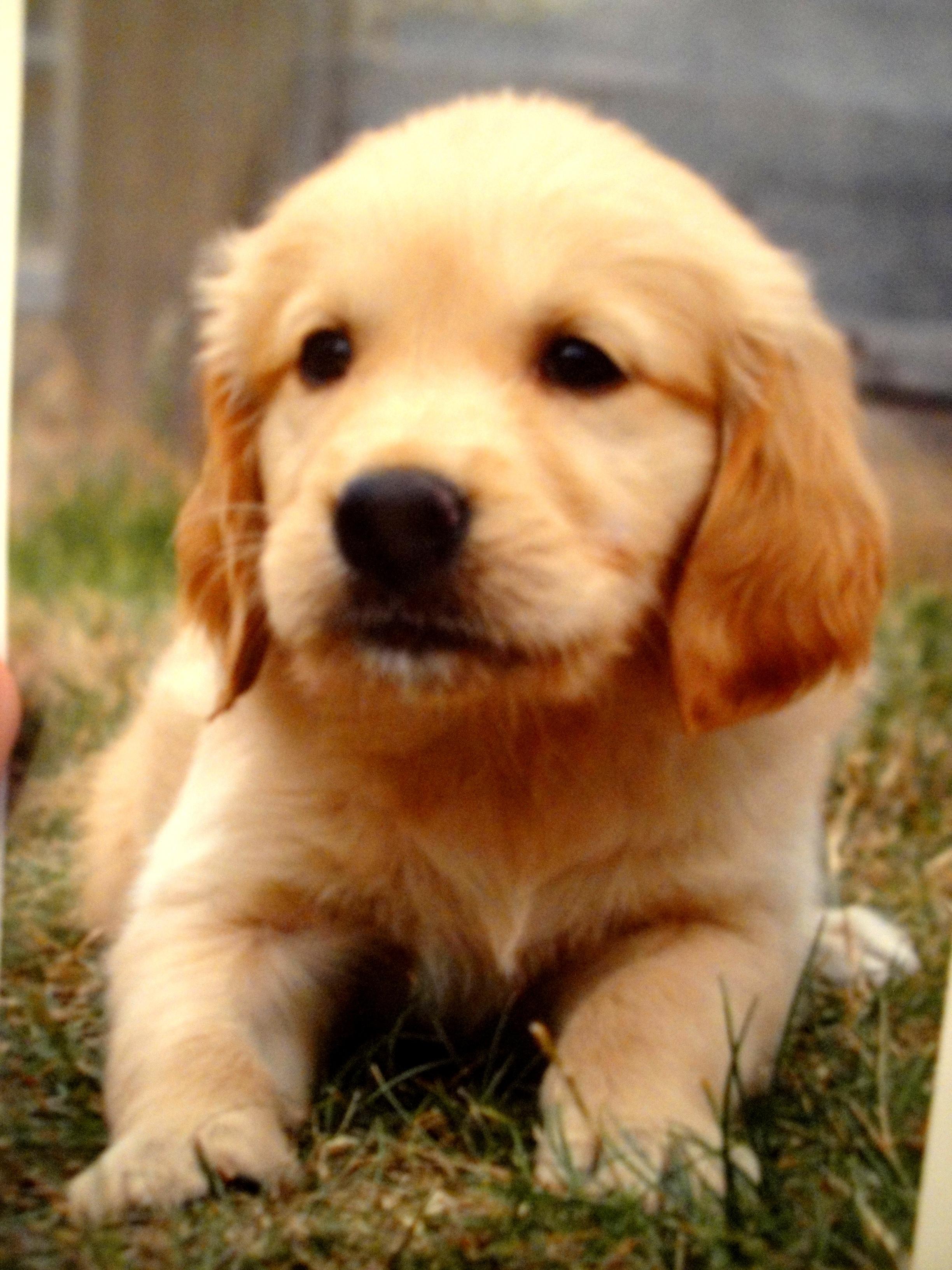 Kasper Sponsor a puppy